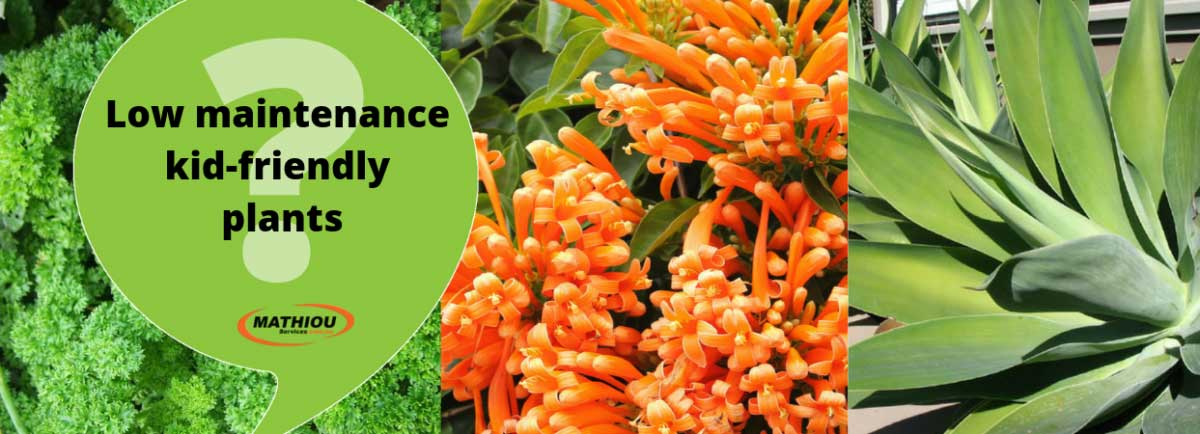 Low maintenance kid friendly plants