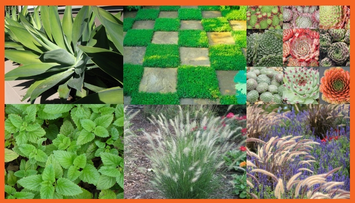 Low maintenance and kid friendly plants - great for Spring Community Gardening & Landscaping Services