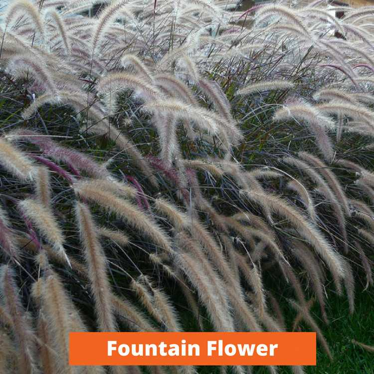 Fountain Flower Low maintenance and kid friendly plants