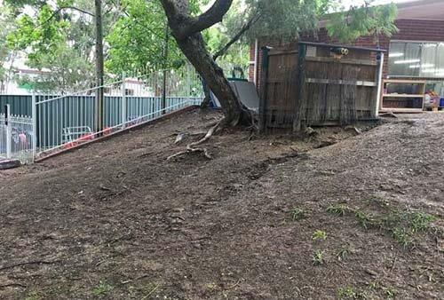 Tree Aspley