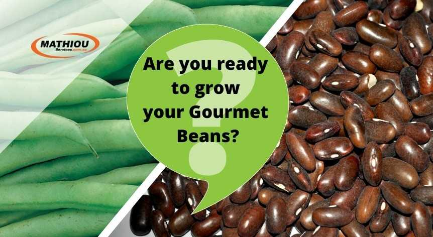 How to grow gourmet beans from seeds_