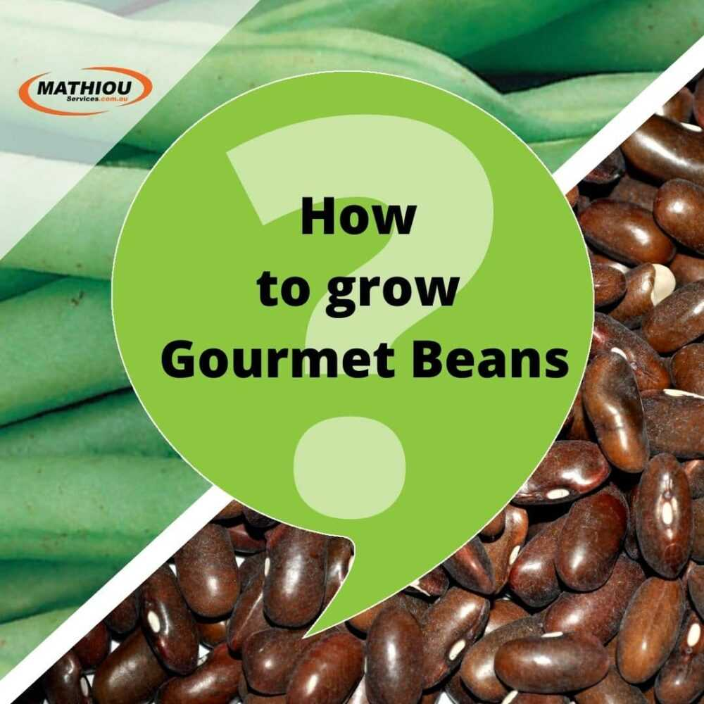 Instructions on How to grow your Gourmet Beans