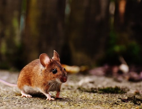 Guide to Keeping Your Office Rodent Free