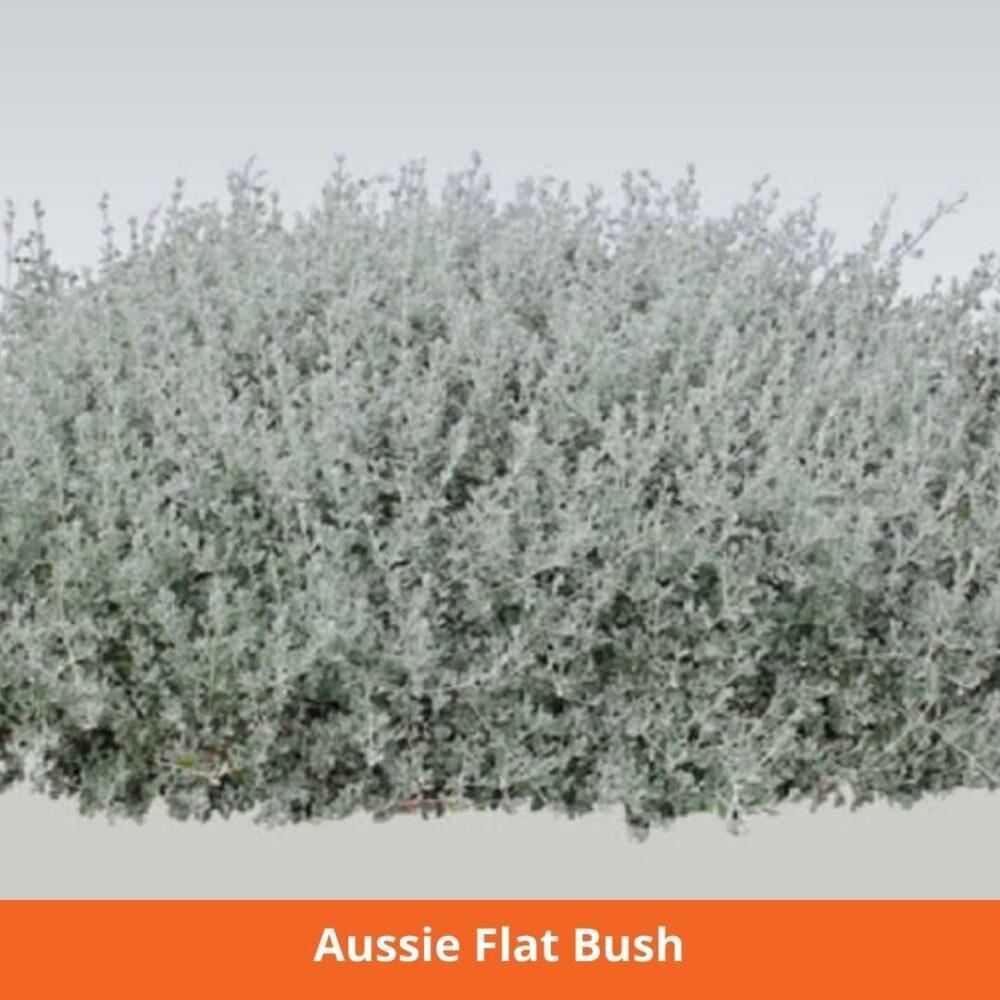 Aussie Flat Bush