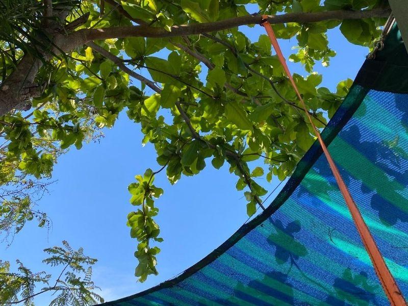 check that no trees are causing shade sail damage